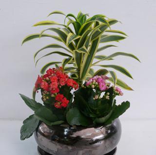 מארזי צמחים למתנות