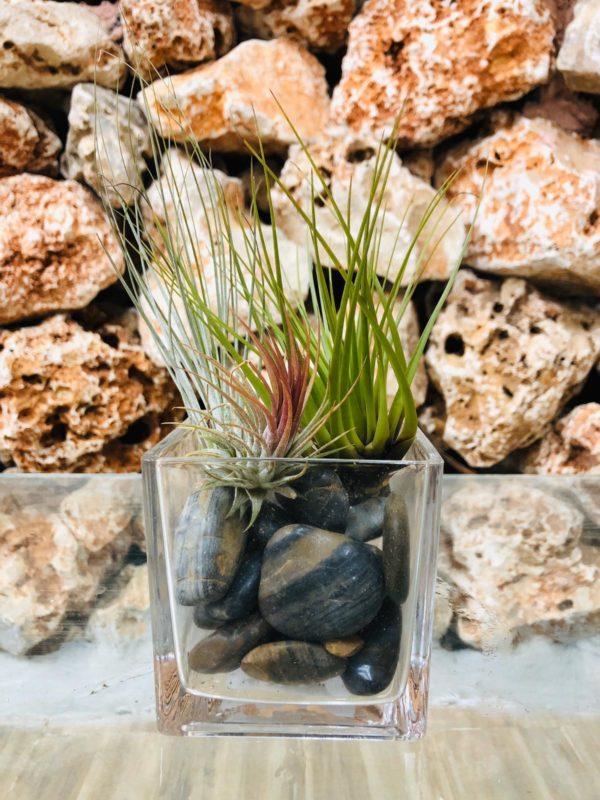 עיצוב 3 צמחי אוויר בכלי זכוכית